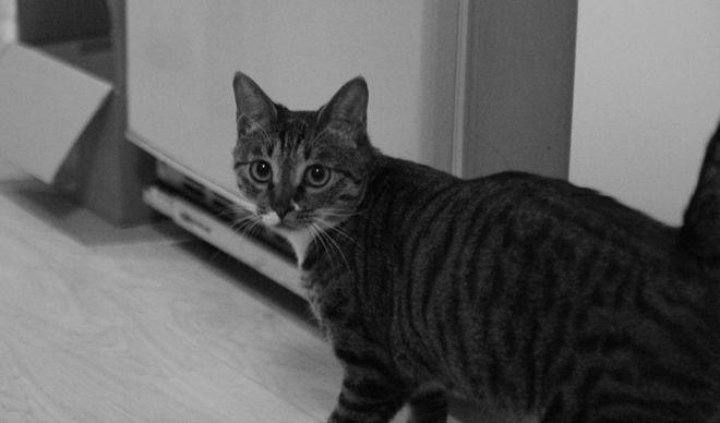 IMAGE: Xiaolin Zeng's Cat